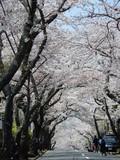 桜を堪能した春でした